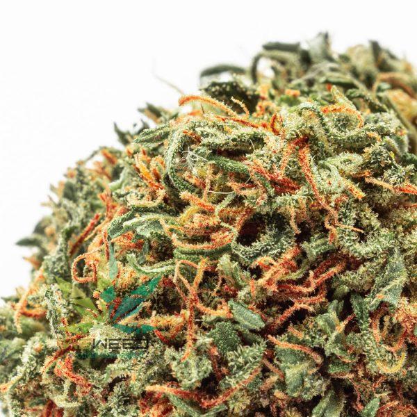 Bubba Kush cannabis legale