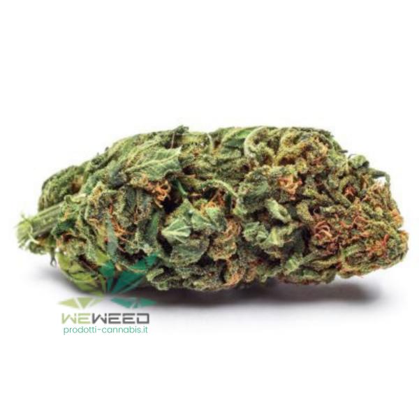 silver haze cannabis legale
