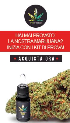 Olio cbd cannabis light canapa legale marijuana light italia