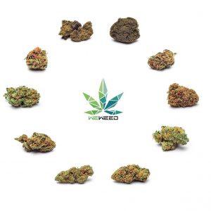 marijuana light hashish legale