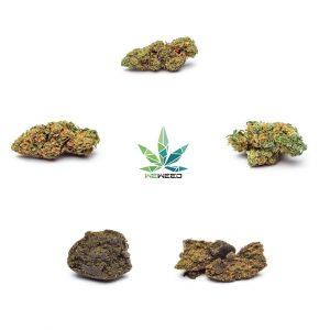 marijuana legale hashish legale